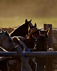 Wyoming Cowboy saddling horses for the days work