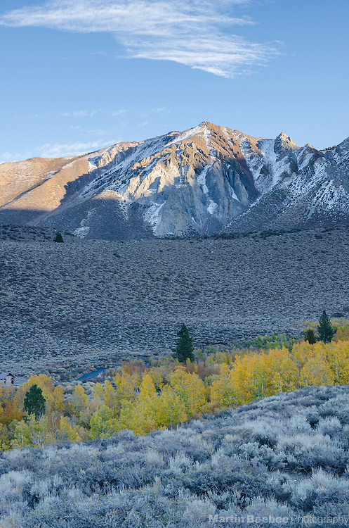 Line of quaking aspen (Populus tremuloides) below mountains, Convict Lake campground, Inyo National Forest, California