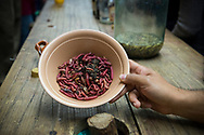A bowl of insect larvae used in the production of mezcal, an agave-based distilled alcholic drink, in Oaxaca state, Mexico.