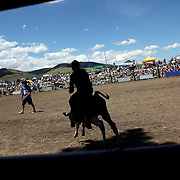 A young rider leaves the loading stalls on a bull during the Millers Flat Rodeo. Otago, New Zealand. 26th December 2011