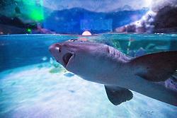 Pics in from inside Sea World. Matt feeding the sharks at Deep Sea World Loch Lomond.