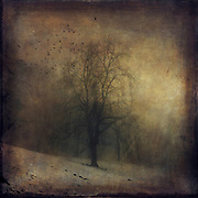 Lone tree shrouded in fog on a winter day - vintage style textured photo