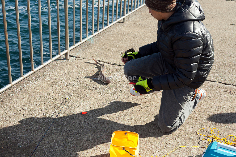 recreational angler with a little baby shark he just caught
