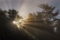 Warm light rays streaming through coastal fog at sunrise, Olympic National Park, WA, USA