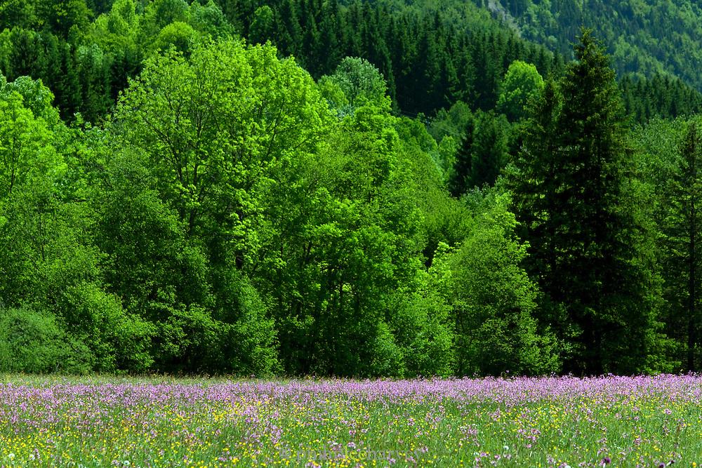 Countryside near Col de la Faucille, Jura region, France