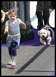 August 5, 2017 - United Kingdom - Image licensed to i-Images Picture Agency. 05/08/2017. Gatcombe Park, United Kingdom.  Mia Tindall playing with a dog on the  second day of the Festival of British Eventing at Gatcombe Park, United Kingdom.  Picture by Stephen Lock / i-Images (Credit Image: © Stephen Lock/i-Images via ZUMA Press)