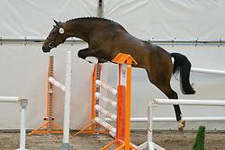 102 - Dilona<br /> KWPN Paardendagen 2011 - Ermelo 2011<br /> © Dirk Caremans