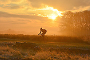 © Licensed to London News Pictures. 10/12/2013. Richmond, UK. A man cycles along against the rising sun.  Sunrise and deer in Richmond Park, Surrey, this morning 10 December. Photo credit : Stephen Simpson/LNP