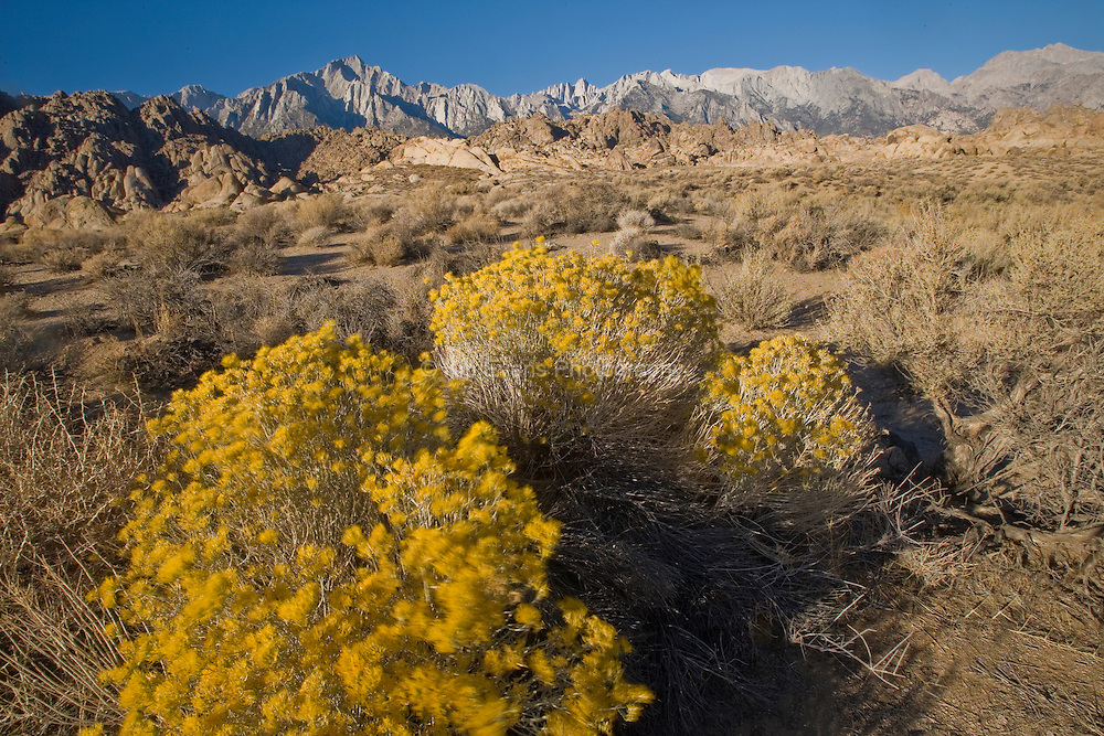 High Desert With Mt. Whitney in the background. Lone Pine, CA