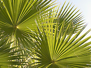 composition with palm tree leaves.