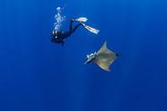 Azores Underwater