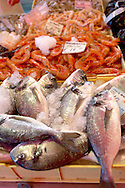 Fresh Sea Food & Fish - Bream - Chioggia - Venice Italy