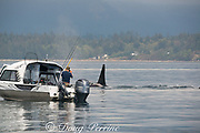 fisherman photographs a passing southern resident orca, or killer whales, Orcinus orca, off southern Vancouver Island, British Columbia, Strait of Juan de Fuca, Canada