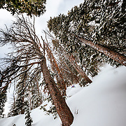 Jess McMillan skis the backcountry powder near Jackson Hole Mountain Resort in Teton Village, Wyoming.