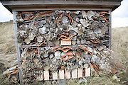An insect hotel for wasps and bees, Ecomare, Texel, Netherlands,