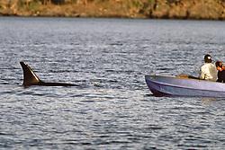 Orca & Small Boat