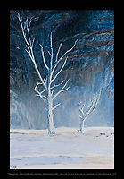 """""""Reaching Trees"""", Yellowstone NP - 36 x 24 inches, acrylics on canvas. © Tim McGuire 2015"""