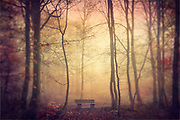 Single bench inn a park on a moody misty November morning<br /> Prints & More:<br /> https://society6.com/product/lovers-bench-g40_print#1=45