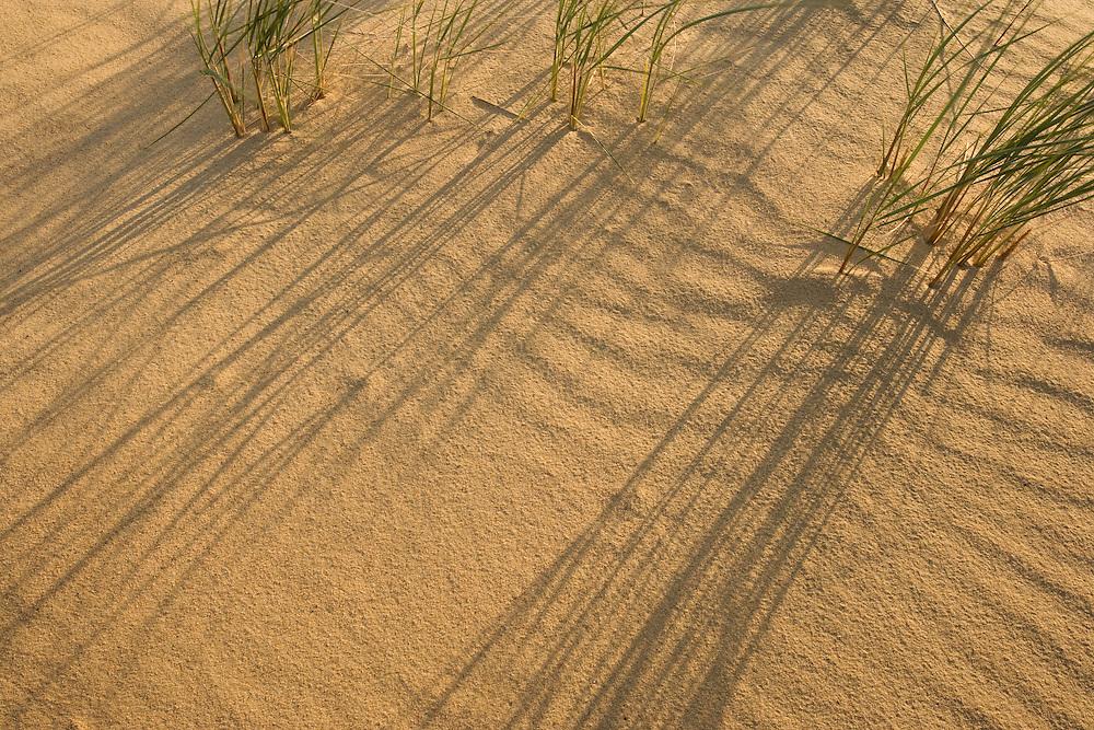 Sand patterns & marram (Ammophila arenaria), Curonian Spit. Lithuania. Mission: Curonian Spit, Lithuania, June 2009.