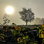Träd och buskar och sol en tidig morgon i Fide.<br /> PHOTO © Bernt Lindgren