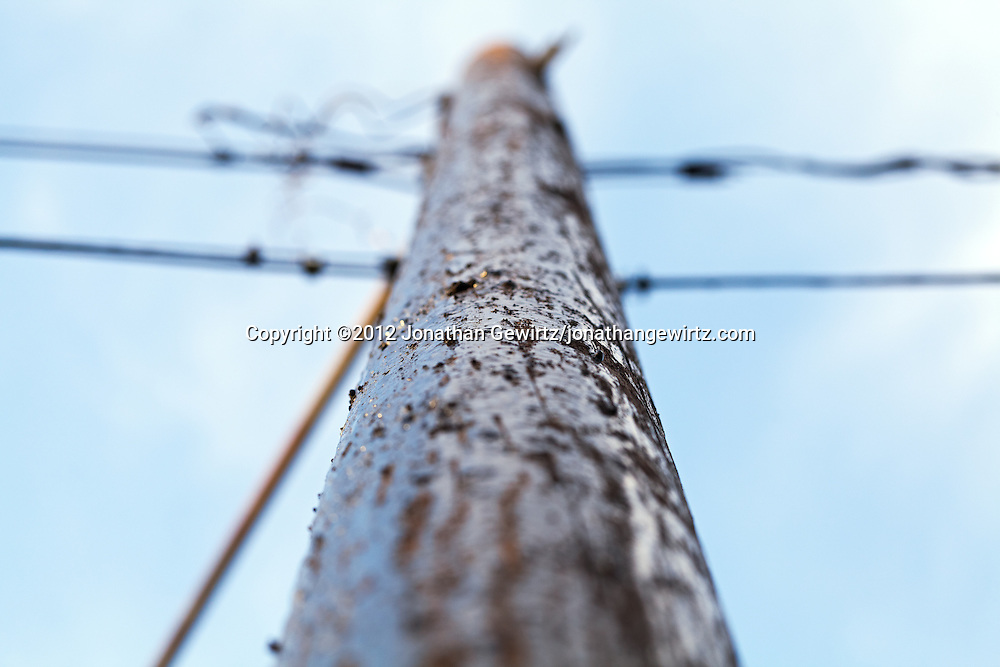 A close view looking up a wooden utility or telephone pole. WATERMARKS WILL NOT APPEAR ON PRINTS OR LICENSED IMAGES.