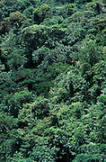 Monteverde Cloud Forest Preserve, Canopy, Costa Rica, rainforest, green, trees, Continental Divide at 1440 meters