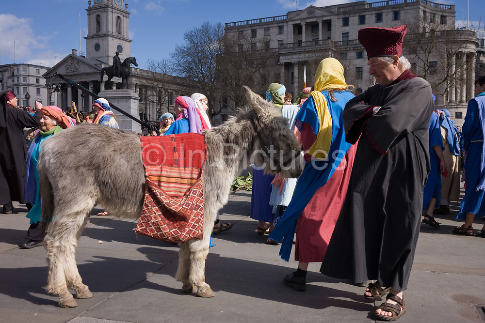 London, 25th March 2016: A donkey is used as a prop during The Passion of Jesus which is performed in Londons Trafalgar Square by members of Wintershall Trust. Played annually on Good Friday it celebrates the cruxifixion and resurrection of Jesus Christ. The cast re-enacts the Christian Biblical story to an audience of thousands and the main character is played by professional actor James Burke-Dunsmore.