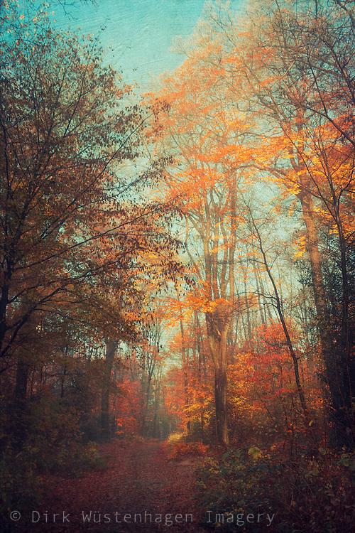 Forest path in autumn colors - texturized photograph