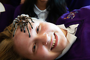 12/11/2018 Repro free: Galway Science and Technology Festival, the largest science event in Ireland, runs from 11-25 November featuring exciting talks, workshops and special events. Full programme at GalwayScience.ie. Braving a tarantula Wiktoria Szejna from Our  Lady's College Galway at the  Science and Technology Festival. . Photo:Andrew Downes, Xposure.