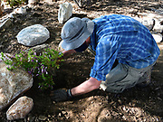 Planting begins! It's time to add some low-water use plants to these basins.