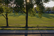 Jogger runs under 100 year-old ash trees in a park in the south London borough of Lambeth.
