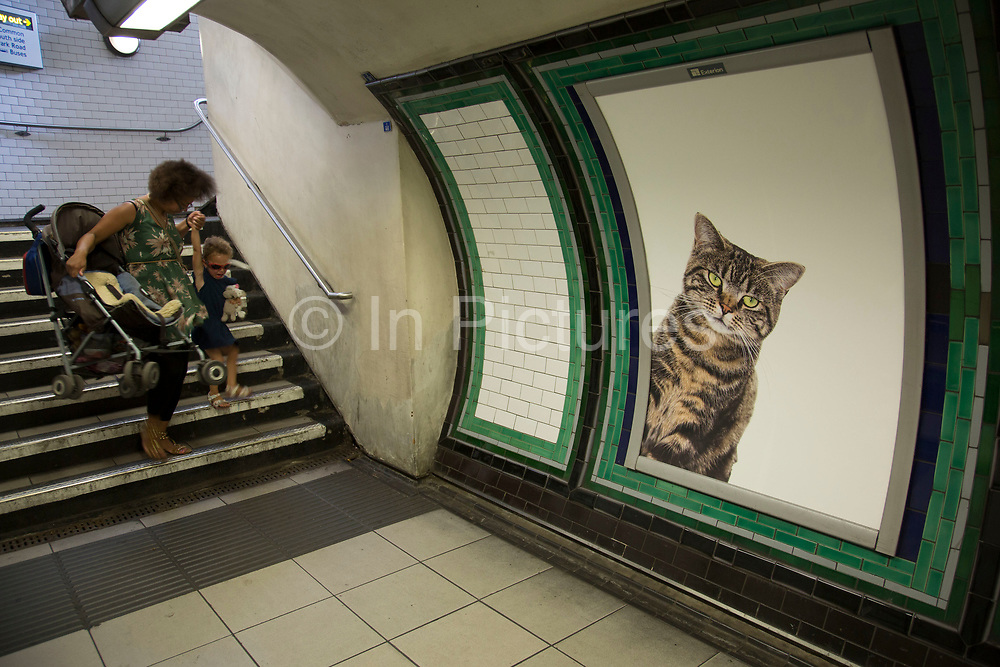 Cats not Ads campaign at Clapham Common tube station is the first campaign organised by Glimpse, an open and voluntary collective for creative people, Citizens Advertising Takeover Service CATS on 13th September 2016 in London, United Kingdom. A successful Kickstarter campaign ran to replace dozens of adverts at Clapham Common underground station, with pictures of cats. The idea was to help people think a bit differently about the world around them, and get inspired to change things for the better.