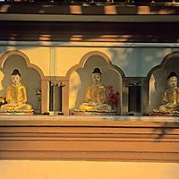 Asia, India, Sarnath. Golden Buddhas at Deer Park in Sarnath.