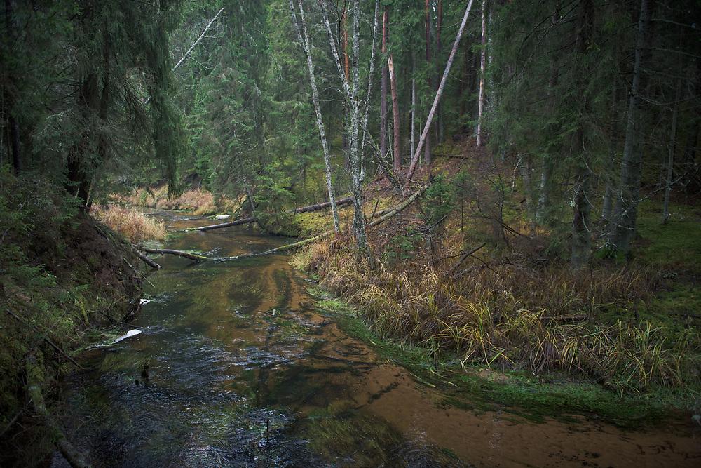 Shallow river bends of river Strīķupe in autumn   Vidzeme, Latvia