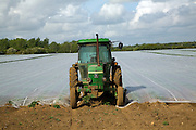 Green tractor parked at end of field covered by protective fleece, Bawdsey, Suffolk, England