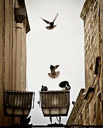 Piccioni in volo in una via a Galatina in provincia di Lecce. 25/03/2010 (PH Gabriele Spedicato)