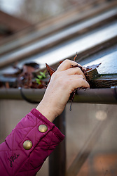 Clearing leaves from a greenhouse gutter