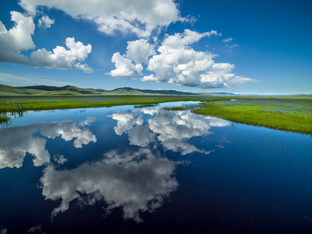 Centennial Marsh Wetlands clouds reflection and Camas Flowers.  Licensing and Open Edition Prints.
