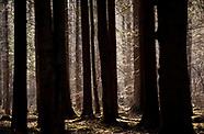 Puszcza Białowieska. Wczesna wiosna w pierwotnym lesie