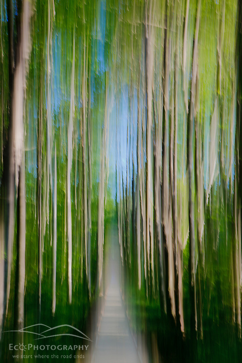 Forest trail abstract, Sieur de Monts, Acadia National Park, Maine.