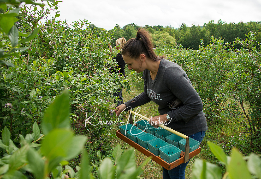Julie Beaulieu and her sister Krista Pelkey came prepared for the bumper crop of blueberries at Stone Brook Farm in Gilford over the weekend.  (Karen Bobotas/for the Laconia Daily Sun)