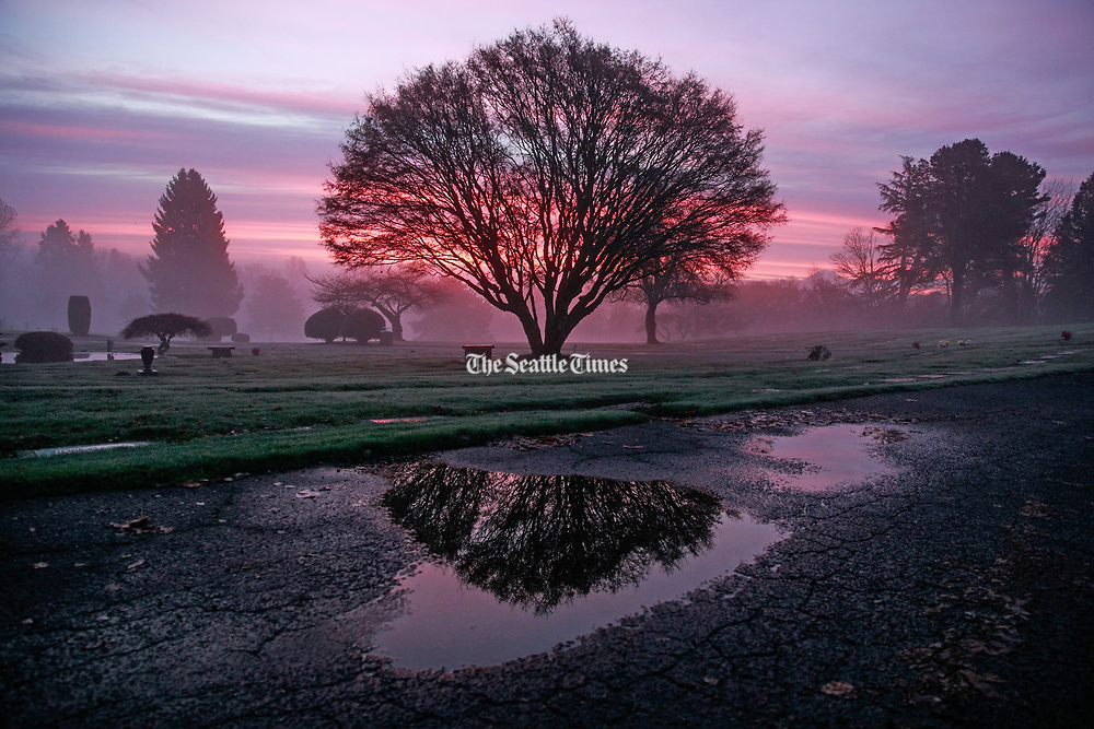 The sunrise filters through fog at Forest Lawn Cemetery in West Seattle. (Erika Schultz / The Seattle Times)