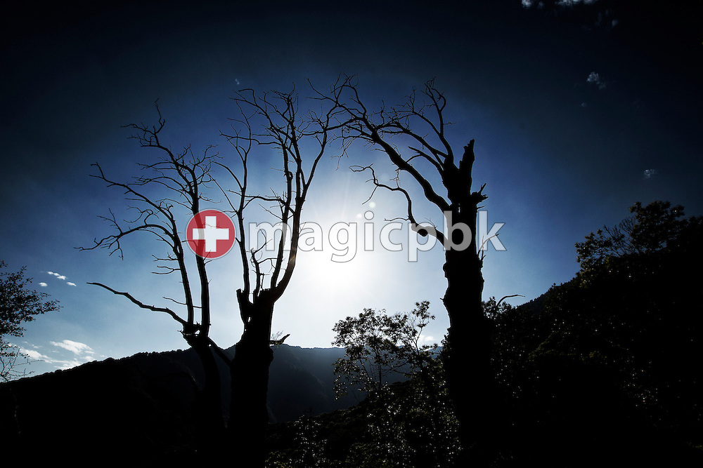 Tow dead trees are pictured against the sun above Corte di Sotto in Monte Carasso, Switzerland, Monday, June 20, 2011. (Photo by Patrick B. Kraemer / MAGICPBK)
