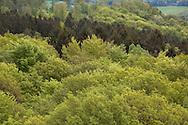 Europa, Deutschland, Nordrhein-Westfalen, Bergisches Land, Waldbroel, Blick vom 40 Meter hohen Aussichtsturm des Baumwipfelpfads im Naturerlebnispark Panarbora, Baumkronen. - <br /> <br /> Europe, Germany, North Rhine-Westphalia, Bergisches Land region, Waldbroel, view from the 40 meter high look-out at the nature park Panarbora, treetop.