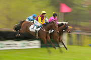 9  April, 2011:  Paddy Young (maroon and yellow silks) jumps a hurdle aboard TIZSILK in the Stoneybrook feature race, the Sandhills Cup.