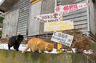 """Vägskylt på ön Tashirojima som kallas för """"kattön"""" eftersom här lever hundratals katter tillsammans med ca 50 personer.   <br /> Ishinomaki, Miyagi Prefecture, Japan. <br /> Fotograf: Christina Sjögren<br /> Copyright 2018, All Rights Reserved"""