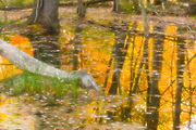 Autumn pond reflection, evening light, October, Cheshire County, New Hampshire, USA