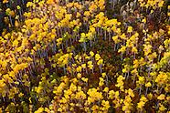 Fall Color Prints