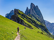 Sharp spires of the Geisler/Odle Group soar above a hiker on green Alpe di Seceda, above St. Christina and Ortisei, in South Tyrol, the Dolomites, Italy, Europe. The beautiful ski resort of Selva di Val Gardena (German: Wolkenstein in Gröden; Ladin: Sëlva Gherdëine) makes a great hiking base in the Trentino-Alto Adige/Südtirol (South Tyrol) region of Italy. For our favorite hike in the Dolomiti, start from Selva with the first morning bus to Ortisei, take the Seceda lift, admire great views up at the cross on the edge of Val di Funes (Villnöss), then walk 12 miles (2000 feet up, 5000 feet down) via the steep pass Furcela Forces De Sieles (Forcella Forces de Sielles) to beautiful Vallunga (trail #2 to 16), finishing where you started in Selva. The hike traverses the Geisler/Odle and Puez Groups from verdant pastures to alpine wonders, all preserved in a vast Nature Park: Parco Naturale Puez-Odle (German: Naturpark Puez-Geisler; Ladin: Parch Natural Pöz-Odles). UNESCO honored the Dolomites as a natural World Heritage Site in 2009.