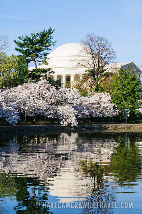 Jefferson Memorial and some of the 1,678 Cherry Blossom trees blooming in early spring around the Tidal Basin next to Washington's National Mall. Reflection on glassy water.